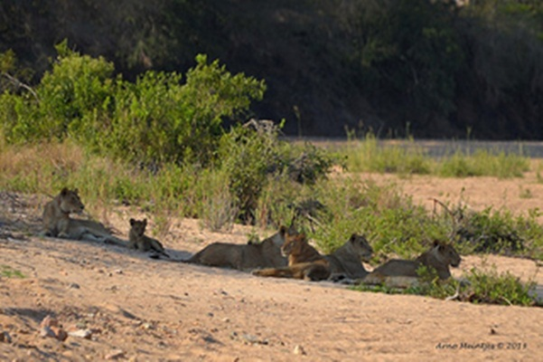 kruger-national-park-2-perfect-safari-vacation-in-south-africa