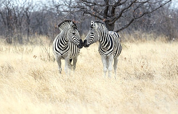 kruger-national-park-africa-safari-vacation