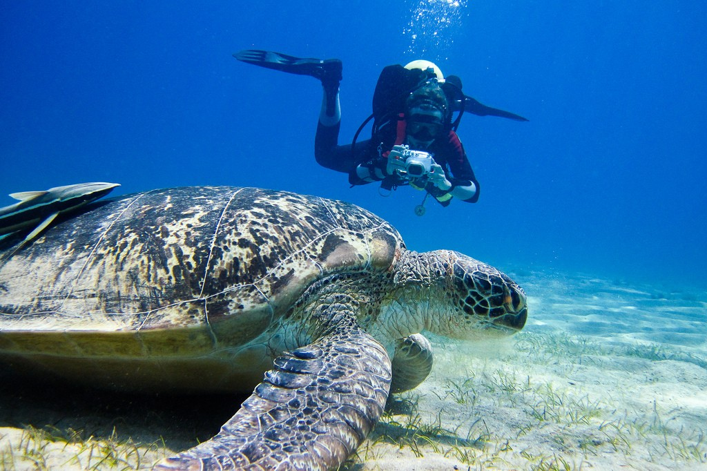 galapagos-in-darwin-arch-el-arco-dive-site-for-scuba-diving